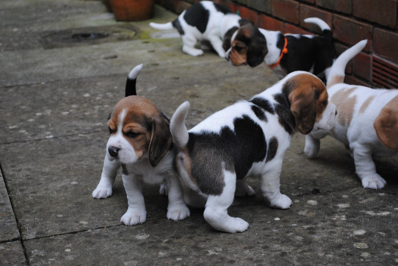 Pets For Sale Adoption in Amberg Germany Classifieds
