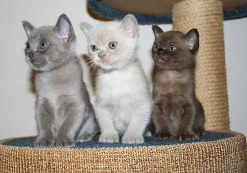 Cats For Sale in Paranaque Philippines