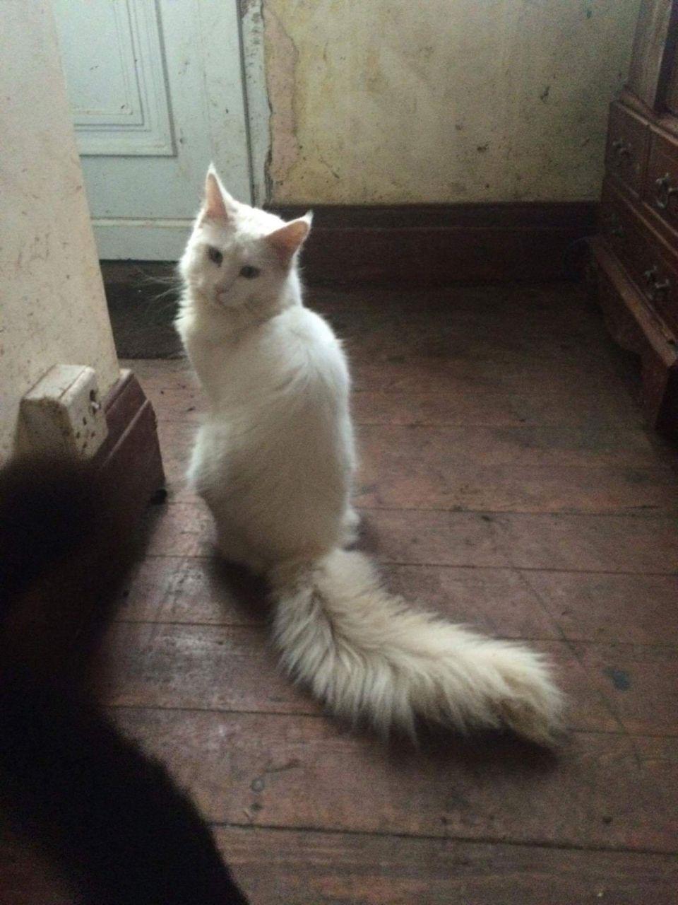 Misamis Oriental Cats For Sale Classifieds Craigslist