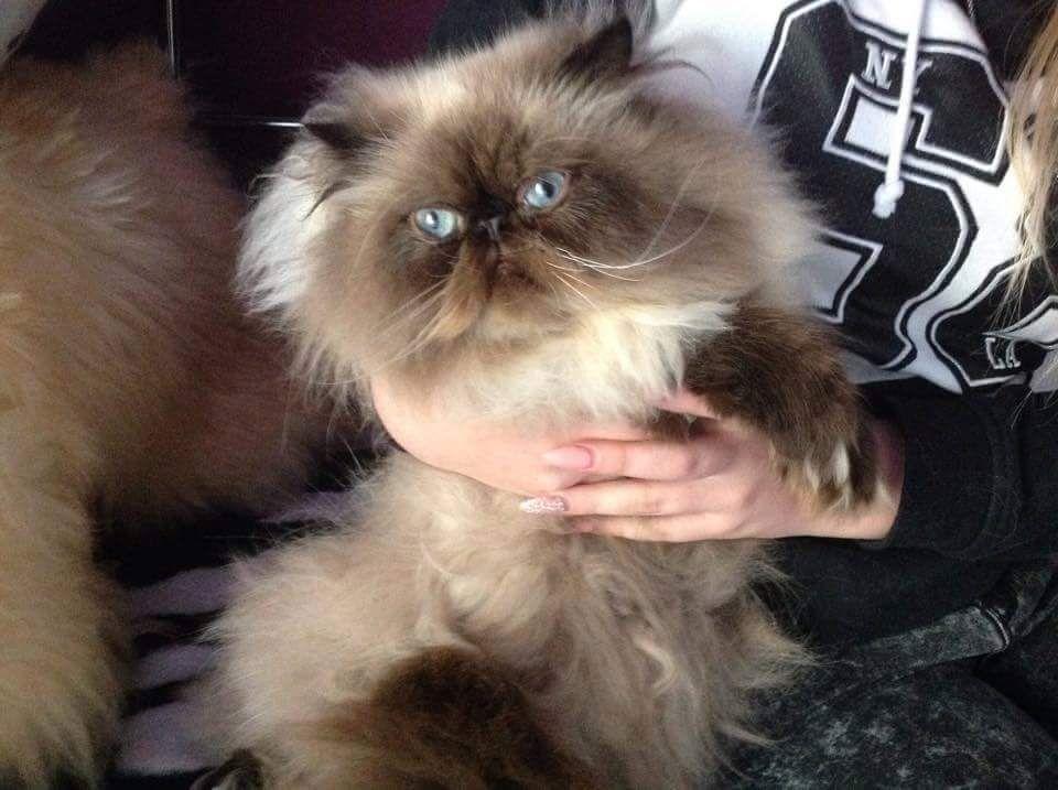 Scranton Cats For Sale in Iowa Classifieds Free Ads