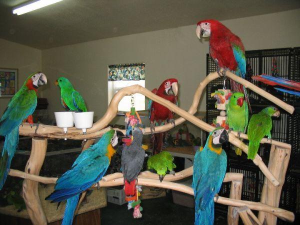 Birds For Sale in Homer Ohio