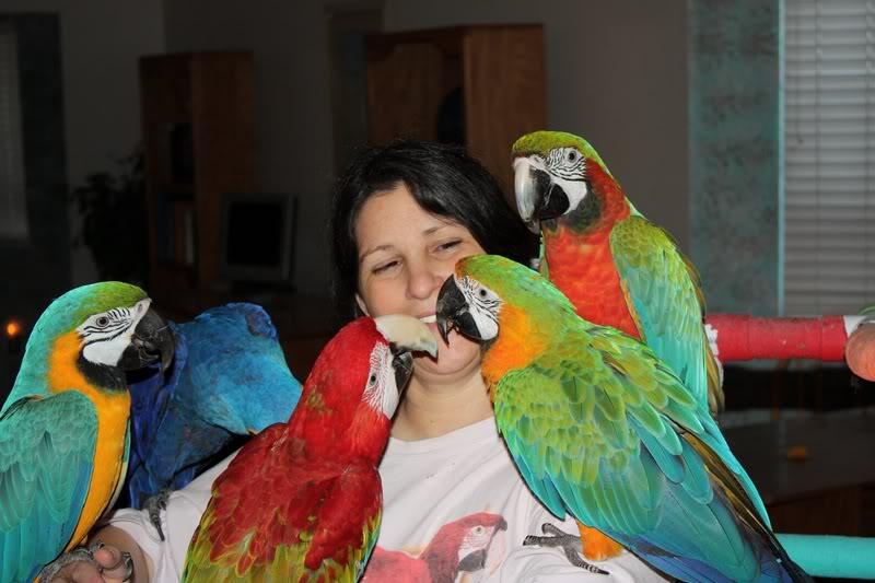Birds For Sale Adoption in Keti Bandar Pakistan Classifieds