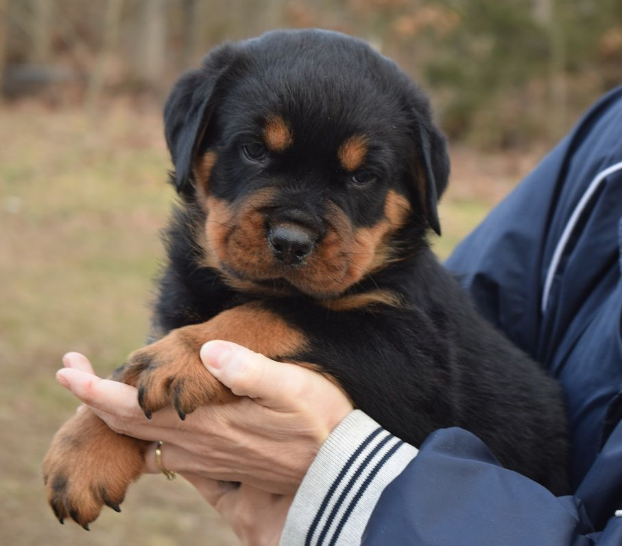 Ligonier Dogs For Sale in Indiana Classifieds Free Ads
